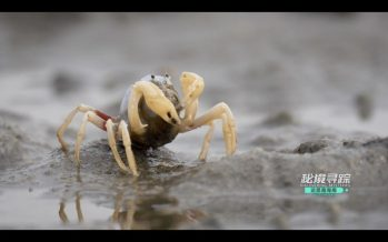 Discovering Mysteries: new season of the Hainan nature documentary launched