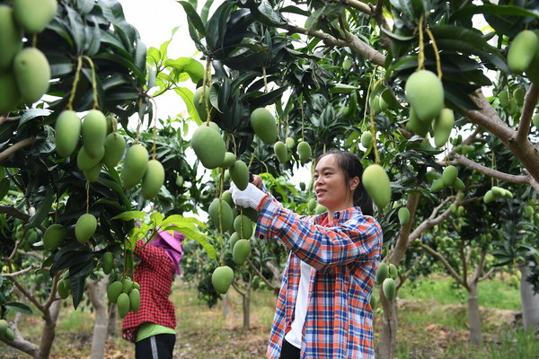 """""""One Red and One Green"""" fruits and vegetables make a distinctive and prosperous industry"""