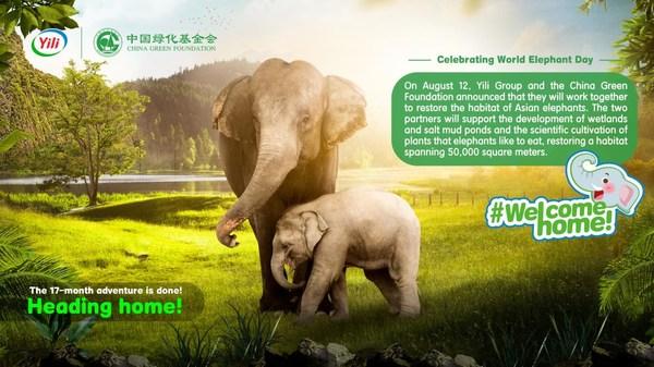 Yili Pledges to Protect Wild Elephant Reserves on 2021 World Elephant Day