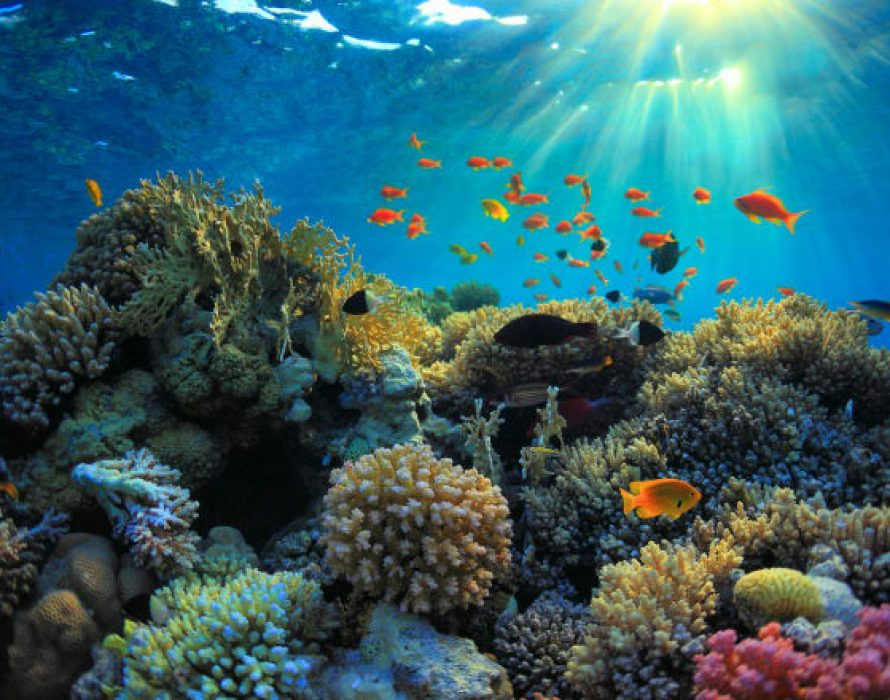 Introduce zoning system to protect coral reef ecosystem