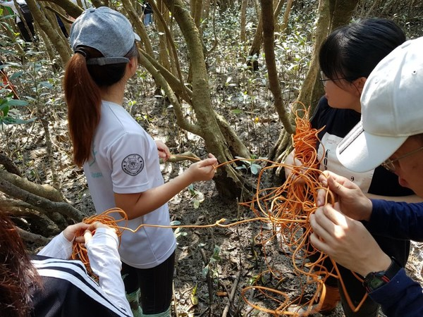 Malaysian students doing sampling practice in the mangroves in Xiamen, photo provided by Lee Wei Xin