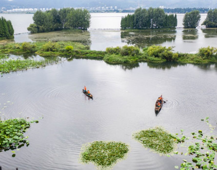 Xinhua Silk Road: Wetlands conservation efforts help SW. China's Kunming improve ecology