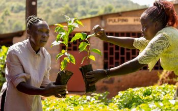'Keep your promises' – COP26 climate call from 1.8 million Fairtrade farmers to world leaders